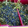 Blueberry farmers warn of 'disaster' crop